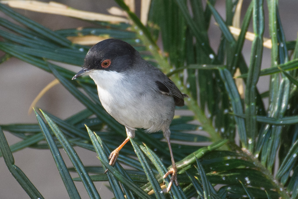 Gulls, Warblers, Pigeons and Palms