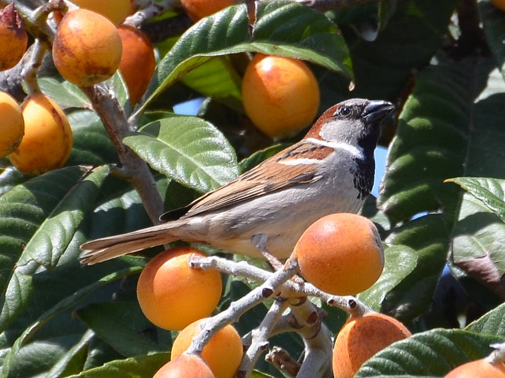 Sparrows, Sea Figs, Hoppers and others