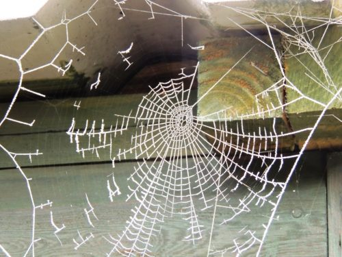 Spider's web in the frost
