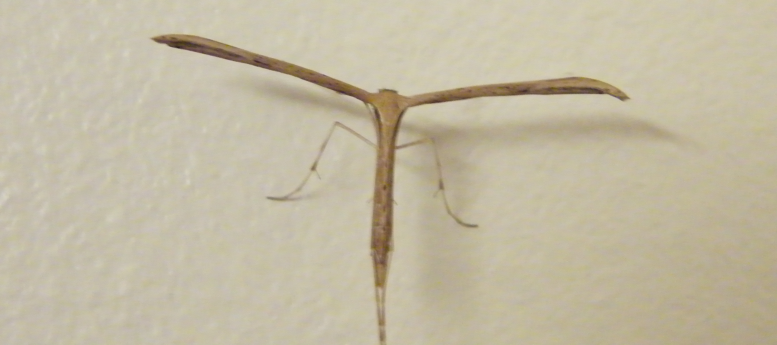 Moth in Kitchen, 1 Nov