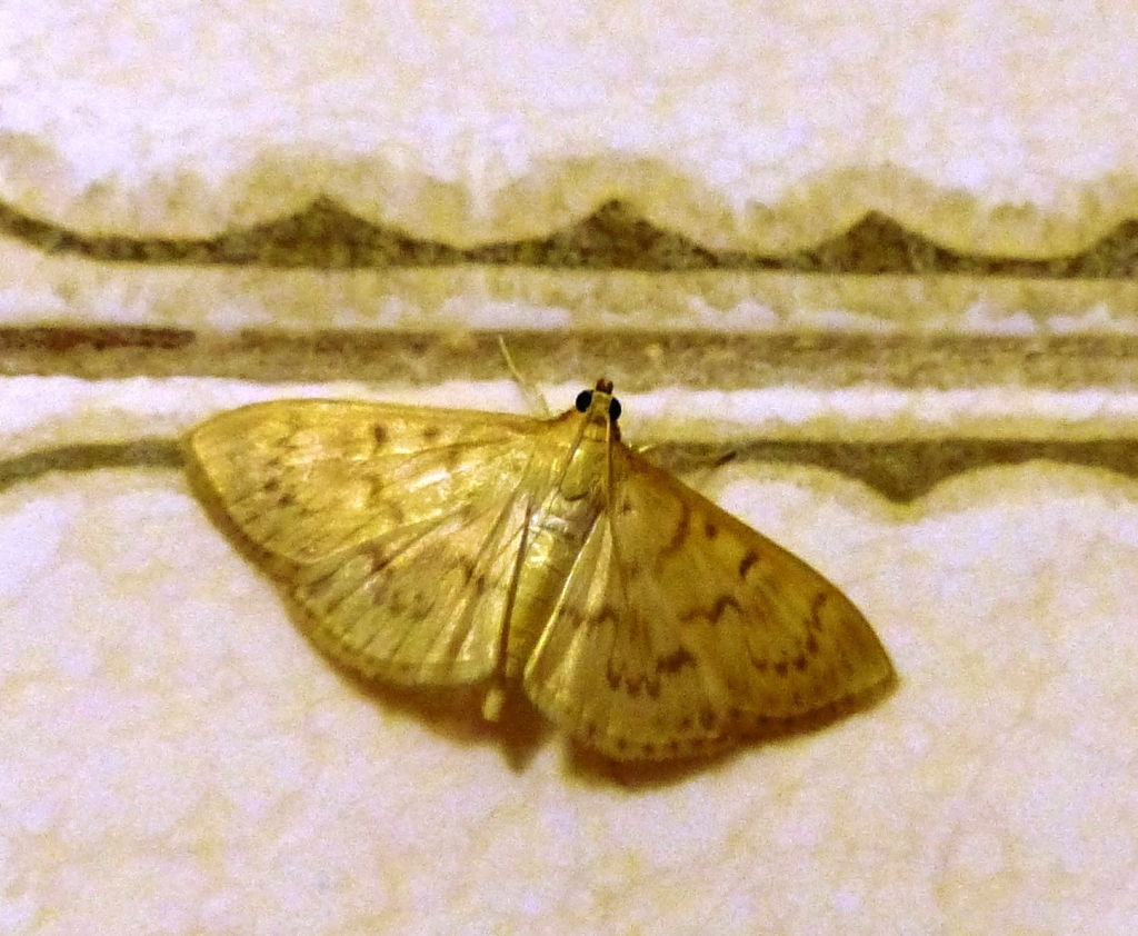 Tiny Moths In Bathroom 28 Images Tiny Moths In