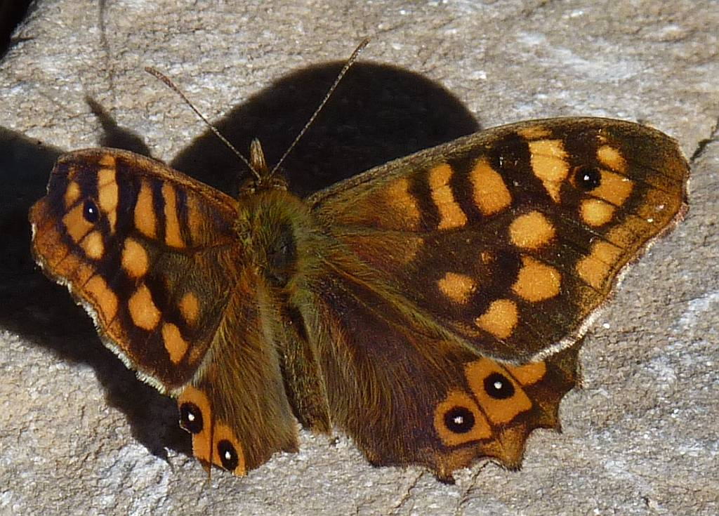 Wall Brown, rio Higueron, Frigiliana