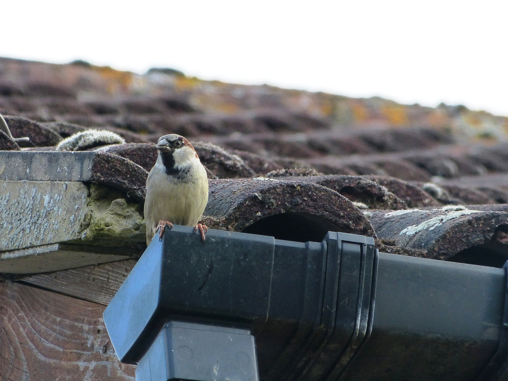 how to get rid of sparrows nesting in awning