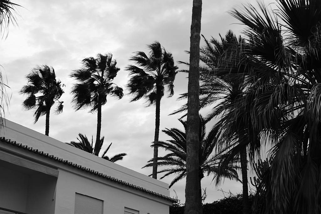 Wind in the palms, Nerja