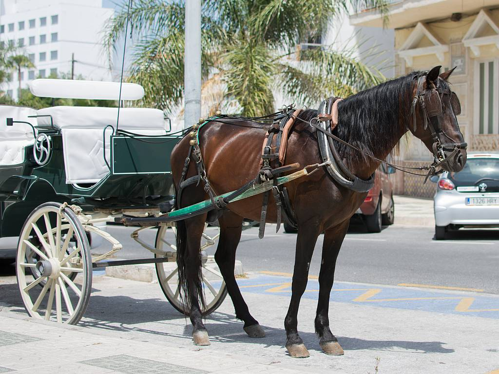 Carriage horse, Nerja