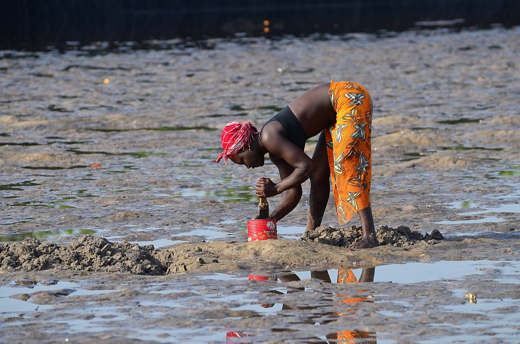 Mussel hunter, Gambia