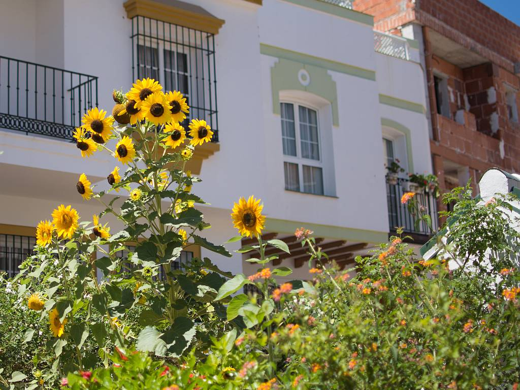 sunflowers, Nerja