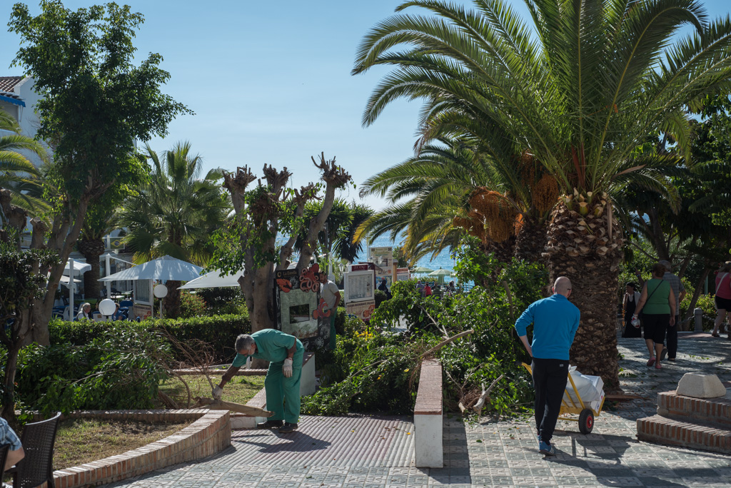 tree trimming, Nerja