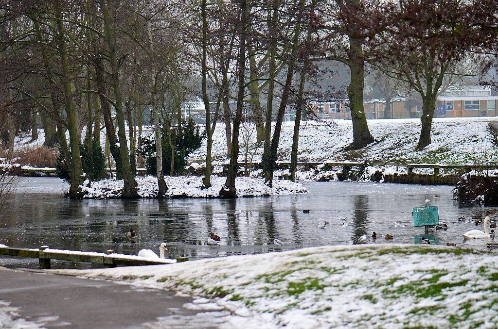 Woodley pond